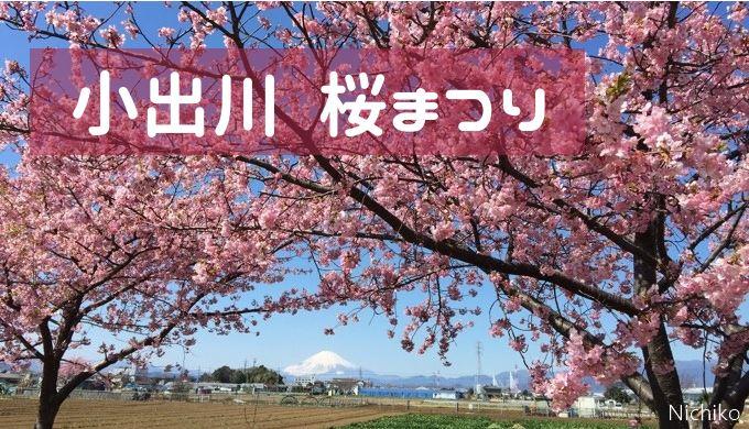 小出川 桜まつり 河津桜