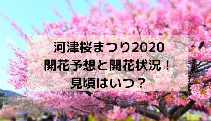 河津桜まつり2020の開花予想と開花状況!見頃はいつ?